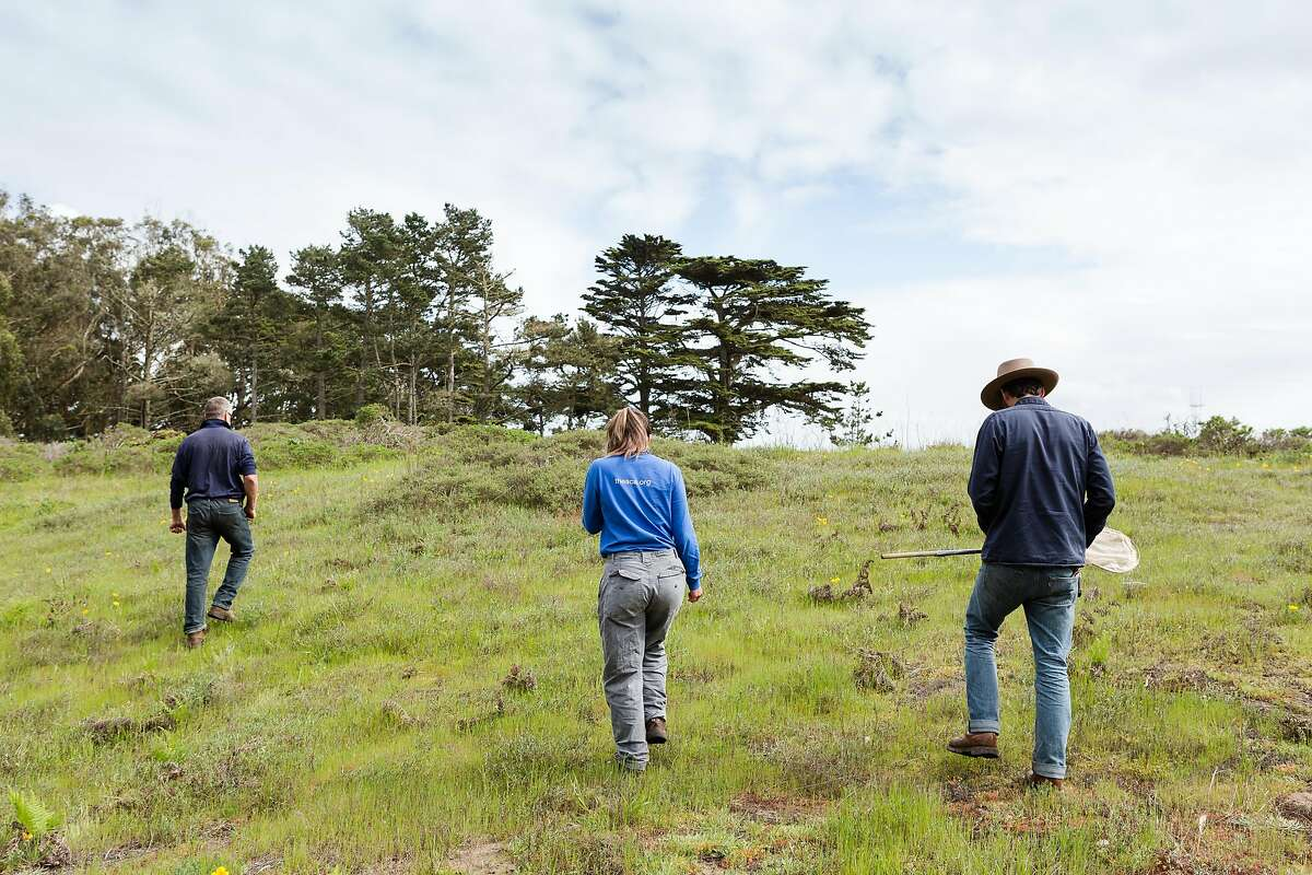 Brian Hildebidle, Presidio Trust Supervisory Natural Resource Management Specialist (left), Tessa Lin, Seasonal Biological Technician, and Jonathan Young, Wildlife Ecologist for the Presidio Trust, walk at the restored sand dunes in Presidio, San Francisco, California, on Tuesday, March 26, 2019.