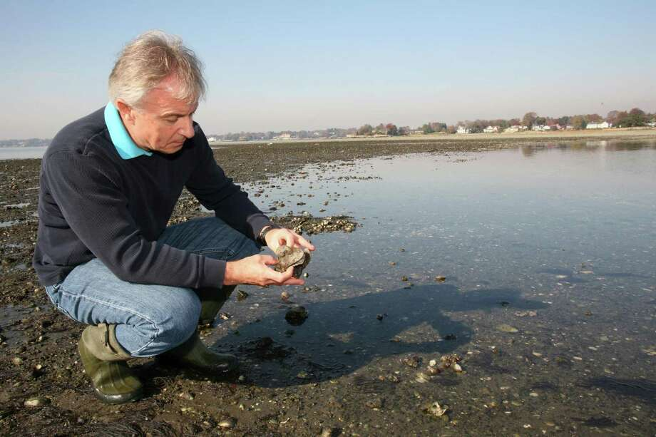 Roger Bowgen examines some oysters at Greenwich Point Park, where the Greenwich Shellfish Commission will hold a shellfishing demonstration from 2 to 4 p.m. Sunday.Residents can learn about the thriving population of oysters, clams and mussels in Long Island Sound. More information is available at www.greenwichct.gov/696/Shellfish-Commission. Photo: File / Hearst Connecticut Media / 00011118A