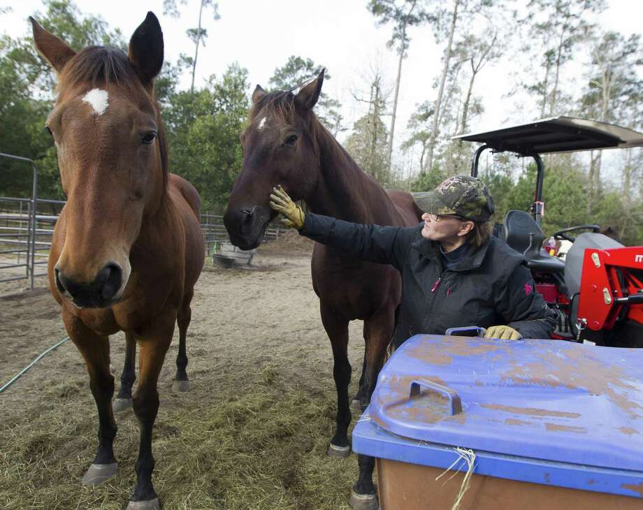 Linda Ward pets a horse as she delivers hay at Henry's Home Horse & Human Sanctuary, Friday, Jan. 5, 2018, in Conroe. John Haynes of Investment Advisory Services donated the new tractor to the nonprofit organization that provides equine therapy sessions for veterans. Photo: Jason Fochtman, Staff Photographer / Houston Chronicle / © 2018 Houston Chronicle