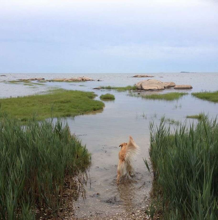 An image of Chaffinch Island Park taken by Guilford photographer Patricia Kantrowitz, whose sister's beloved dog Bennett is featured. The park was the subject of much debate in early 2019, after a Scout proposed installing a gazebo there. Though the town had residents in favor of and against the proposal, which was approved by the Parks and Recreation Commission, the Scout eventually rescinded the application. Photo: Patricia Kantrowitz / Contributed Photo
