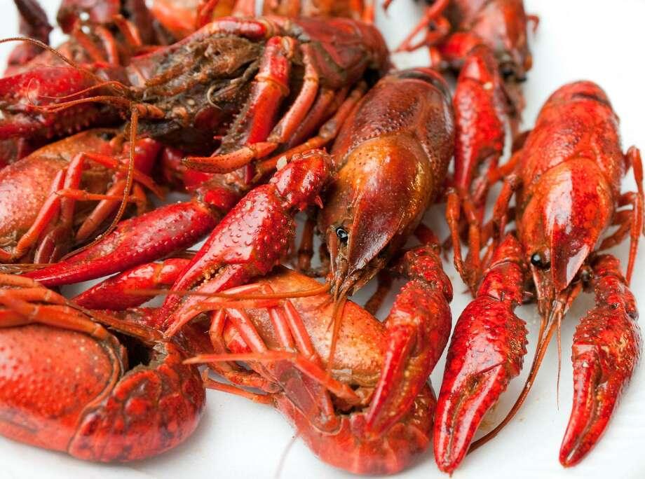 Crayfish. Photo: TMS Photo