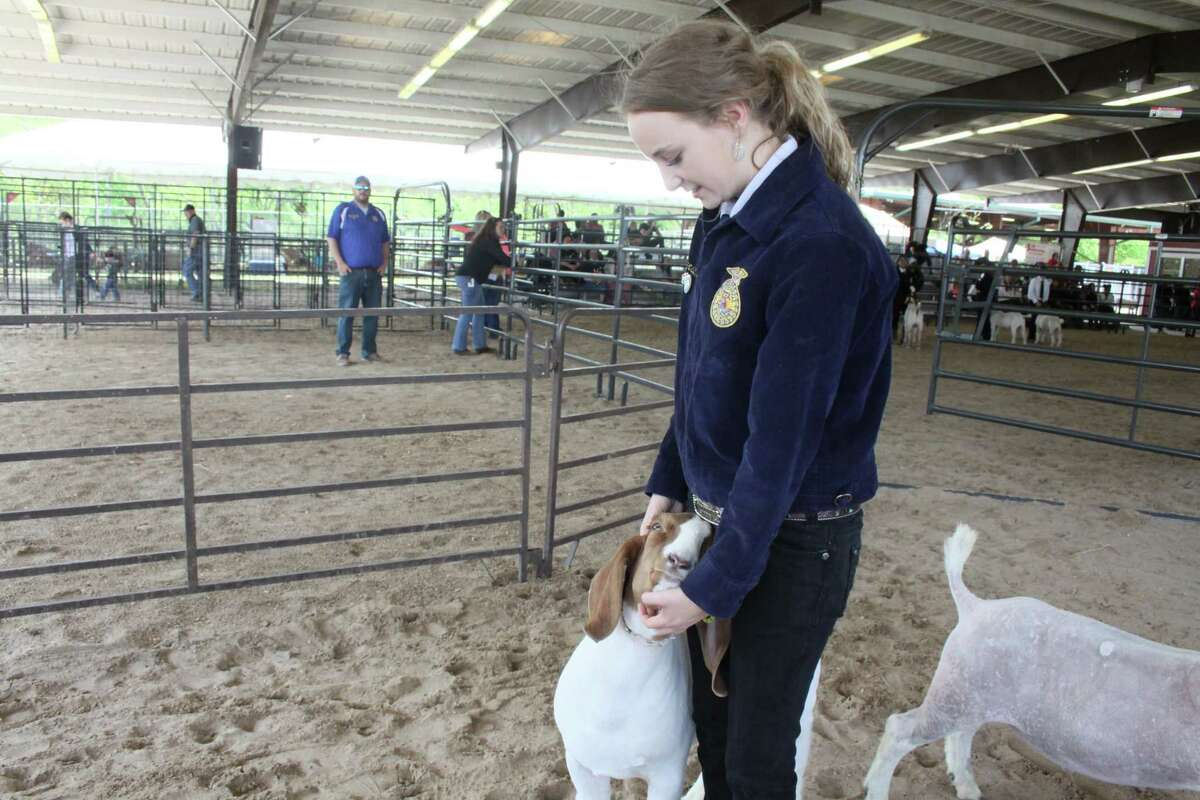 Kierstin Taylor, a senior at Wunsche High School, earned second place at the 68th annual Spring ISD Livestock Show and Fair, poses with her goat on March 28, 2019.