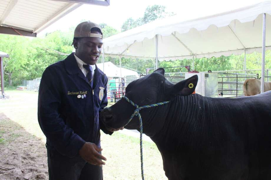 Zechariah Rickett, a junior at Dekaney High School, stands beside his steer, Kobe, at the 68th annual Spring ISD Livestock Show and Fair on March 28, 2019. Photo: Mayra Cruz