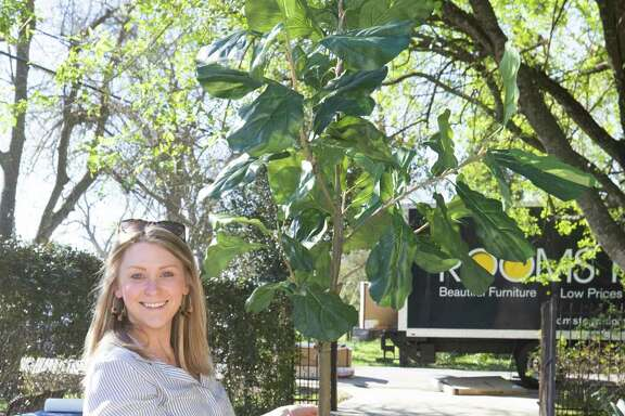 Sydney Manning of Marie Flanigan Interiors carries in a faux fiddle leaf fig plant.