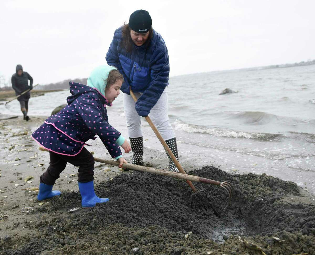Greenwich's Jennifer Donath and her daughter, Jessica Donath, 5, dig for shellfish on the beach at Greenwich Point Park in Old Greenwich, Conn. Sunday, March 31, 2019. The Greenwich Shellfish Commission held a demonstration at Tod's Point Sunday sharing shellfish locations, fishing tactics and regulations. A thriving populatoion of oysters, clams and mussels filter and clean millions of gallons of Greenwich waters every day.