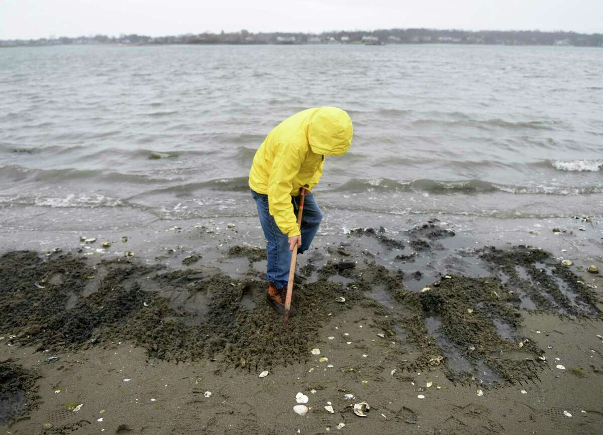 Folks dig for shellfish on the beach at Greenwich Point Park in Old Greenwich, Conn. Sunday, March 31, 2019. The Greenwich Shellfish Commission held a demonstration at Tod's Point Sunday sharing shellfish locations, fishing tactics and regulations. A thriving populatoion of oysters, clams and mussels filter and clean millions of gallons of Greenwich waters every day.