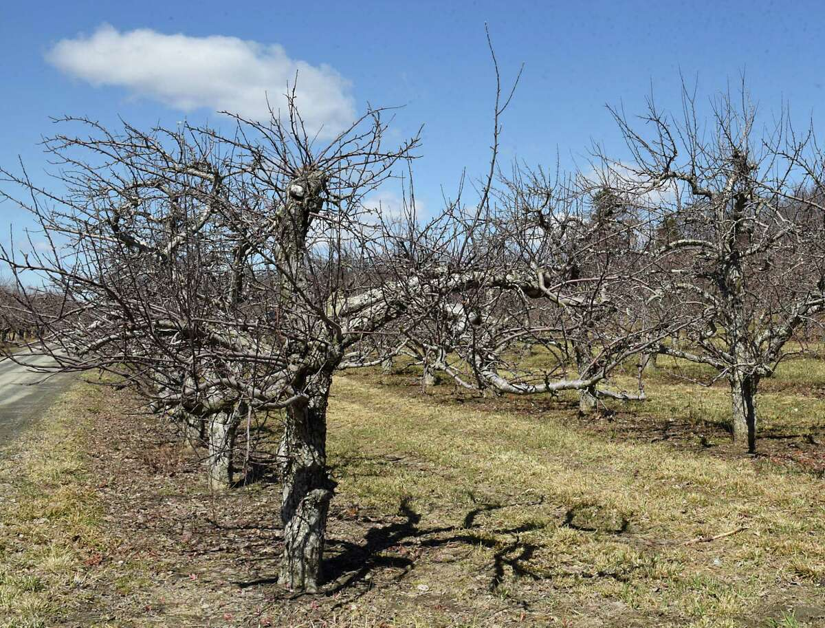 Part of the orchard is seen at Goold Orchards on Monday, April 1, 2019 in Castleton, N.Y. The family-owned apple orchard is selling the business after109 years. (Lori Van Buren/Times Union)