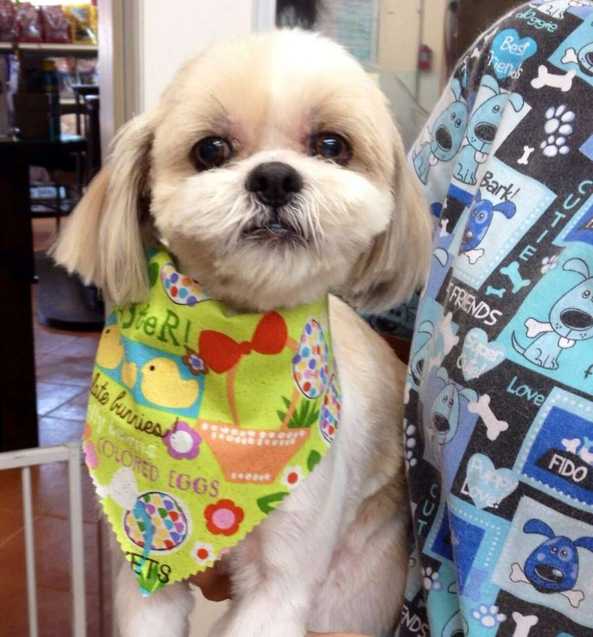 11:30 A.M. Give your pup a glow up atThe Dog House Pet Salonoff Richmond Avenue.The highly-rated pet sitting and grooming salon offers some fancy add-ons to over-indulge your pet, including doggy pedicures. Photo courtesy the Dog House Pet Salon/Yelp