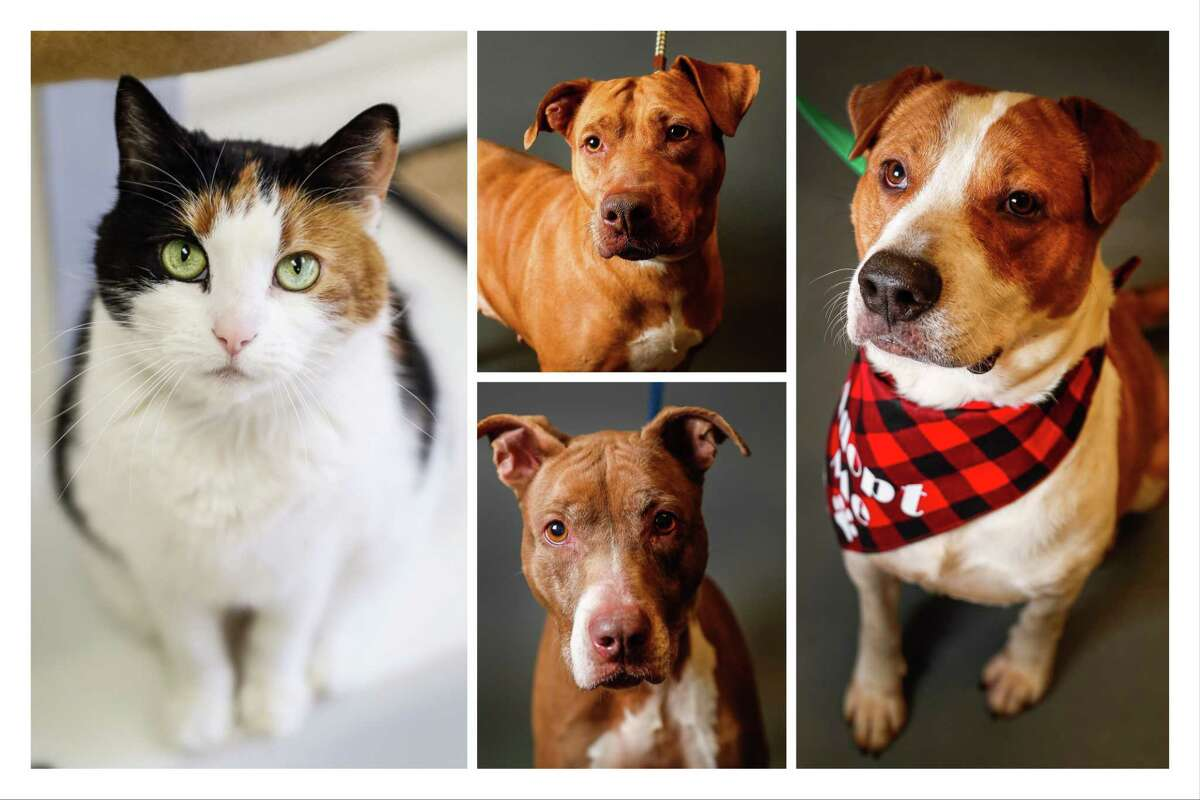 Dogs and cats ready to be adopted from Montgomery County Animal Shelter, 8535 Highway 242, Conroe, TX 77385. Photographed Tuesday, April 2, 2019, in Conroe.
