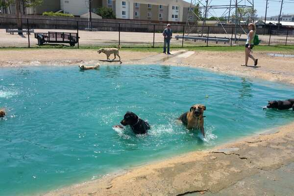 Doggy Date Ideas The Best Day Ever In Houston With Your Pup