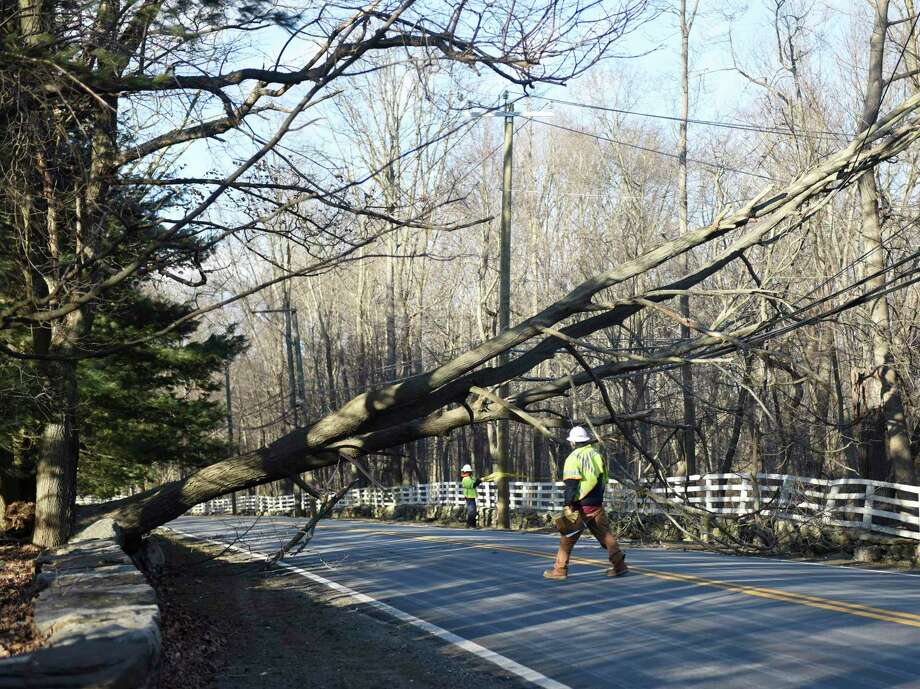 FILE PHOTO: A fallen tree in northern Greenwich, Conn. on Monday, Feb. 25, 2019. Photo: Tyler Sizemore / Hearst Connecticut Media / Greenwich Time