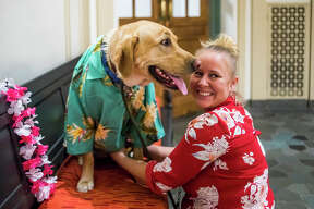 Deputy Probate Register Katy Mishler helps Courthouse Clyde, a therapy dog for the probate and family court, into a Hawaiian shirt during Clyde's second birthday party on Wednesday, April 3, 2019 at the Midland County Courthouse. (Katy Kildee/kkildee@mdn.net)