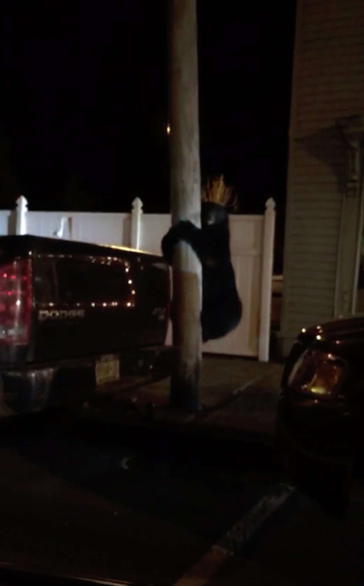 A 100-pound, healthy bear wandered through downtown Hudson, N.Y., on April 2, 2019. No one was hurt and the bear eventually returned to the woods, police said.