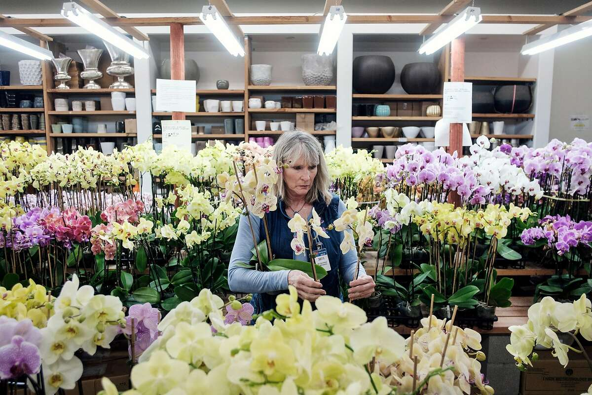 Ellen Caldwell of Northern California Plant Service of San Anselmo shops for orchids at Grace Nursery in the San Francisco Flower Mart in San Francisco, Calif., on Wednesday April 3, 2019.