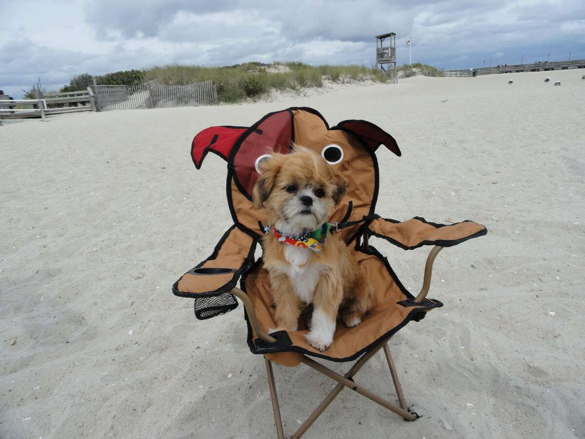 Jeter Ryan: Jeter loves to go to the beach and sit in his favorite doggie chair.