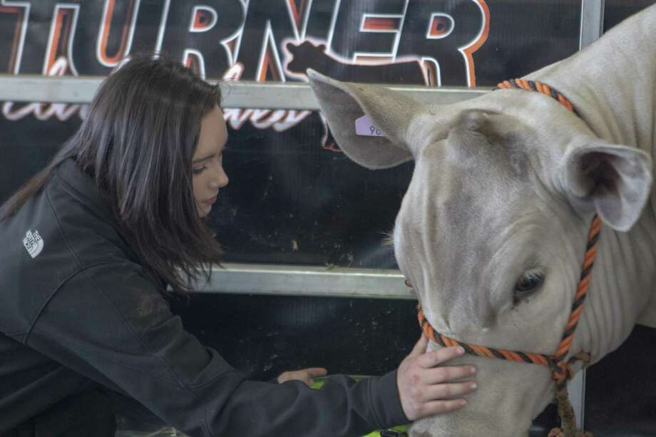 Taylor Turner, 15, of College Park pets her grand champion steer Merle on Wednesday, April 3, 2019 at the Montgomery County Fair Grounds in Conroe. Photo: Cody Bahn, Houston Chronicle / Staff Photographer / © 2018 Houston Chronicle