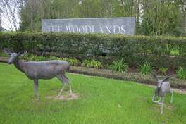 Bronze deer statues decorate the entrance to The Woodlands at the intersection of Texas 242 and FM 1488. The deer statues were among the first to be cleaned and conserved under the three-year plan.