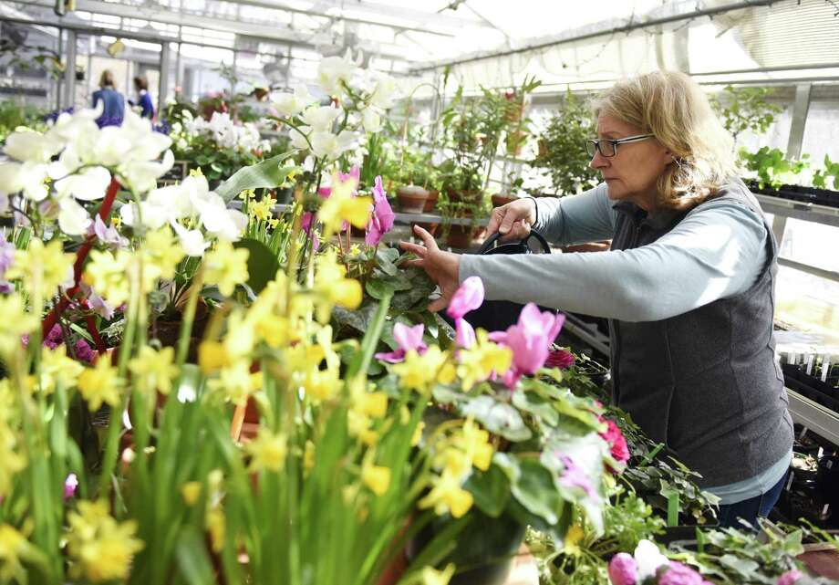 Cos Cob volunteer Kendra Mascioli waters plants at the Greenwich Botanical Center in the Cos Cob section of Greenwich, Conn. Monday, April 1, 2019. As we enter into the spring season, the Botanical Center is preparing for its annual May Gardeners Market on May 4. The pollinator-themed event features a diverse selection of plants, vendors and garden-centric food and items. Photo: Tyler Sizemore / Hearst Connecticut Media / Greenwich Time