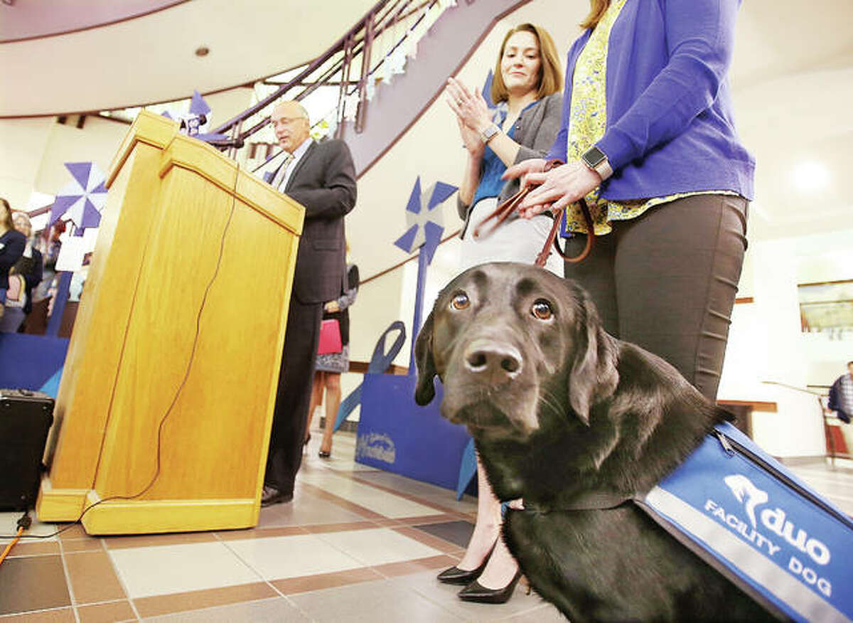 Fitz, the new Madison County Courthouse therapy dog, was a star Friday at the annual event to kick off Child Abuse Prevention Month in the Madison County Administration Building lobby. Madison County Chief Circuit Judge David Hylla, left, introduced Fitz to the crowd as a new addition to the family courts operation.
