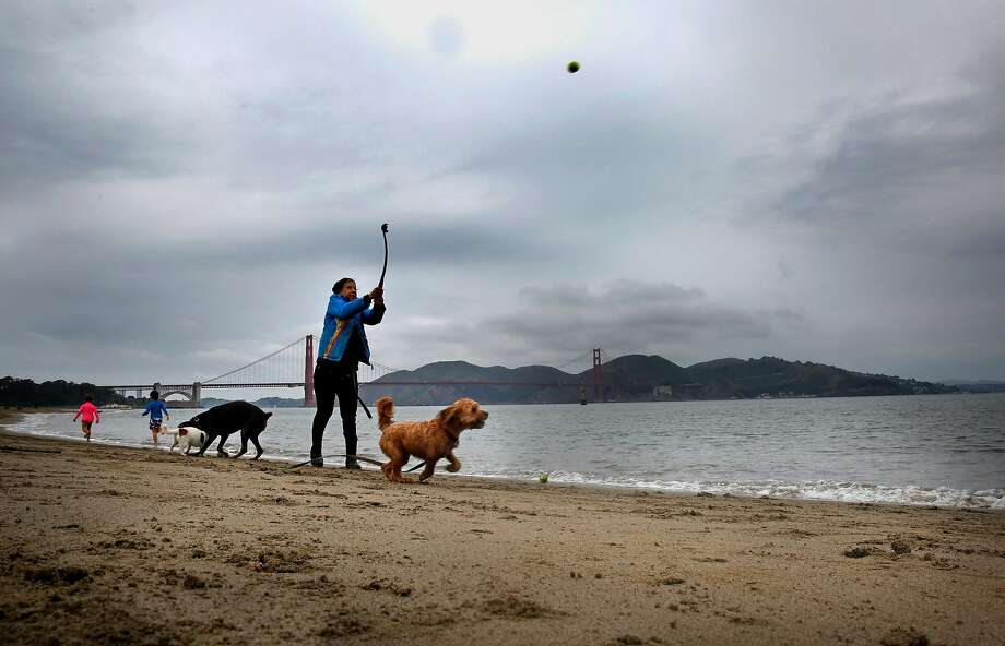 Dog walker Nancy declined giving her last name  plays with her puppies along the Crissy Field shoreline  on Thurs. April. 5, 2018  in San Francisco, Calif. Photo: Michael Macor / The Chronicle