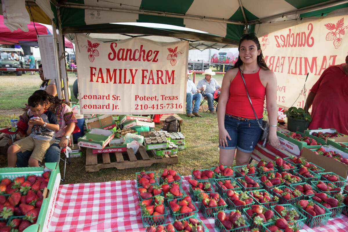 Strawberry lovers celebrate the fruit at the Poteet Strawberry Festival on Saturday, April 7.