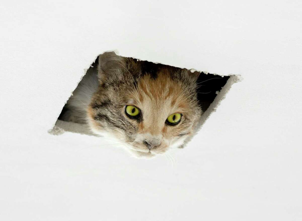 """A. Eva and Franco Mattes, """"Ceiling Cat,"""" 2016."""
