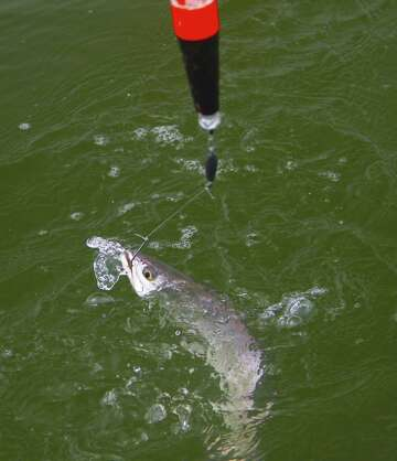 Resist the lure of the lure: Natural baits best for Texas