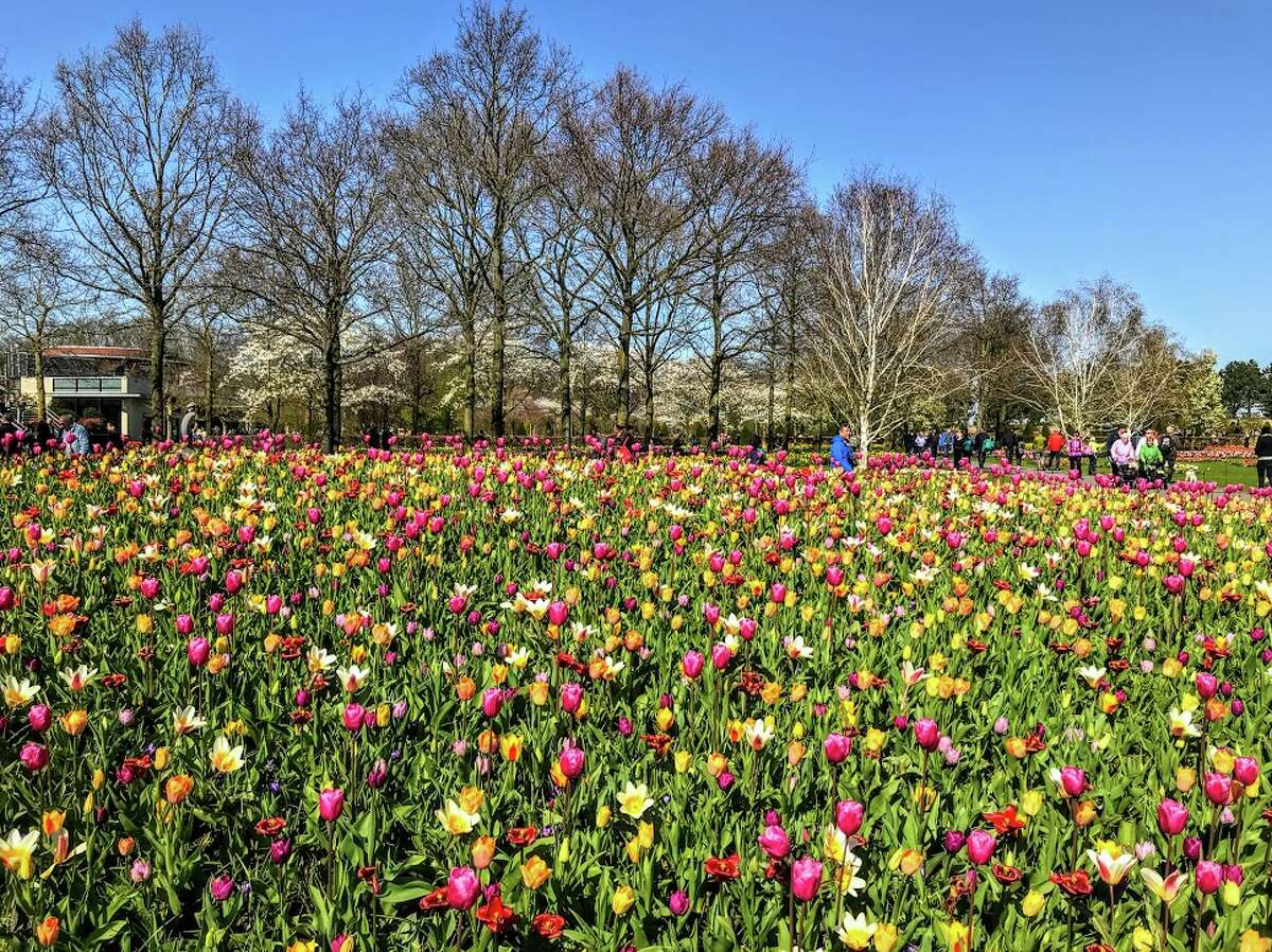 In Amsterdam, tulips and other blooms were just starting to pop during the first week of April- one of the best times of year to be in Europe