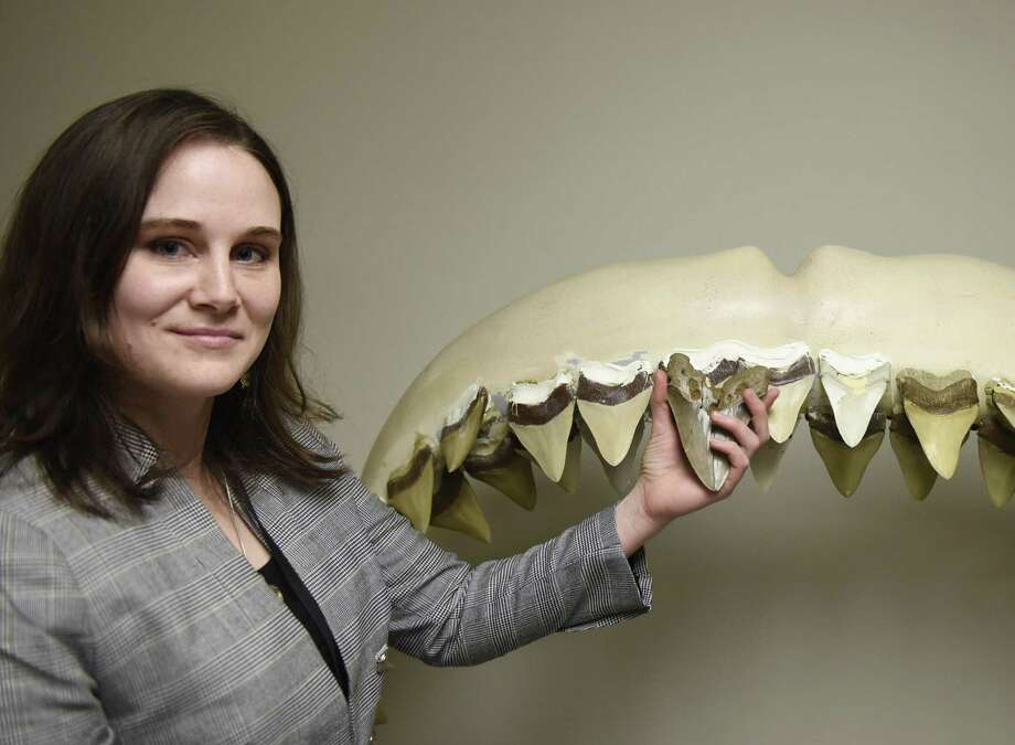 "Science Curatorial Associate Kate Dzikiewicz holds up a tooth from the extinct megaladon shark beside a life-sized model of its jaw, soon to be displayed at the upcoming ""Sharks!"" exhibit at the Bruce Museum in Greenwich, Conn. Thursday, March 7, 2019. The megaladon is an extinct species of shark that lived approximately 23 to 3.6 million years ago and was the largest type of shark that's ever lived, measuring in at around 60 feet. The show, opening April 20, will feature a live look at sharks developing in eggs, life-sized models of sharks, and more than 20 species of shark jaws and teeth on display. Photo: Tyler Sizemore / Hearst Connecticut Media / Greenwich Time"