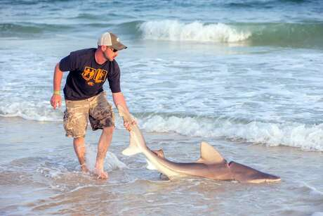 Donald Pittman, Jr. caught a bull shark wrapped in car belt at Gulf State Park in Gulf Shores, Alabama.   (Photo by Sun Shots Photography)
