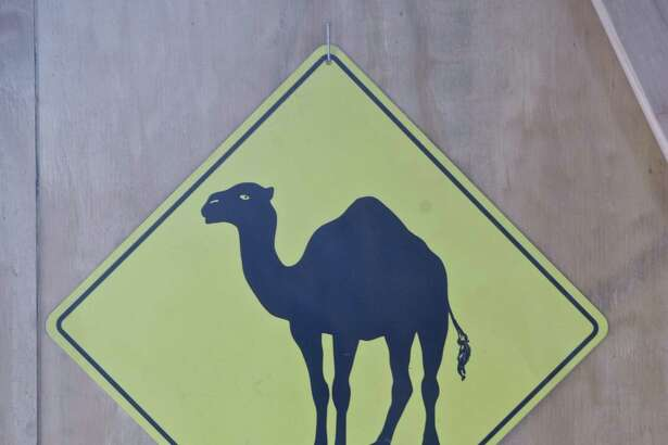 Robb Heering and Stephanie McCleery Heering recently moved to Ridgefield with their camel Sheik. The Heerings have an International Camel Rescue organization and Camel Life, a company that sells camel milk products. Friday, May 4, 2018, in Ridgefield, Conn. A sign in their barn.