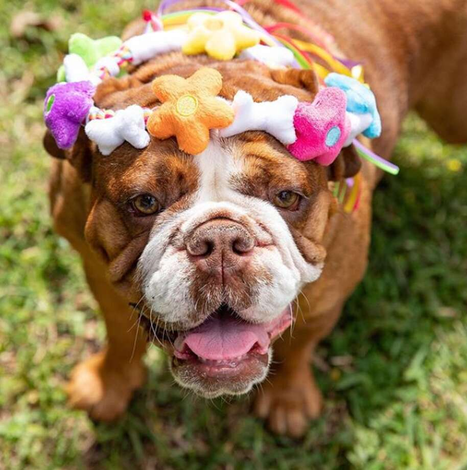 Fetching Flower Crown by Woof & Whiskers Pet Toys. Photo: Courtesy, Woof & Whiskers Pet Toys