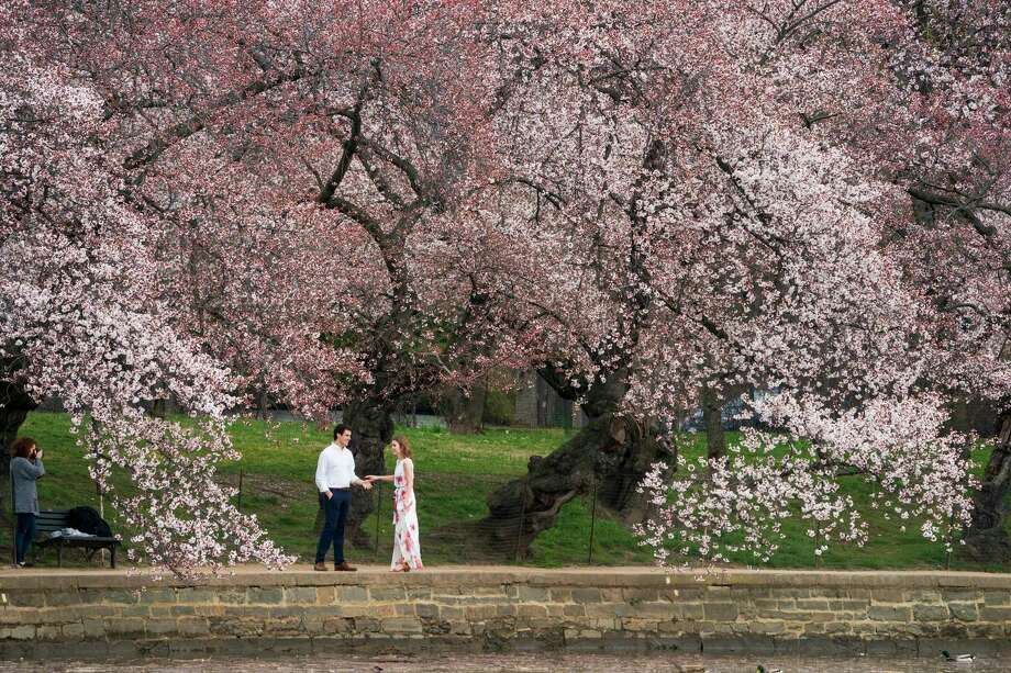 FILE- In this March 29, 2019, file photo a couple poses for pictures at the Tidal Basin in Washington amid the flowering cherry trees. For many of these occasions, you?ll want a professional on hand who can do more than add a fancy filter to an ordinary snapshot. But hiring a photographer to capture life?s important milestones can be pretty pricey. (AP Photo/J. Scott Applewhite, File) Photo: J. Scott Applewhite / Copyright 2019 The Associated Press. All rights reserved.