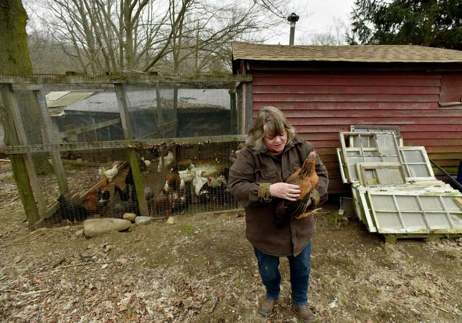Westbrook,  Connecticut - Friday, April 13, 2019:   Bonnie Hall of Westbrook on her and her husband's  10-generation family 200 acre Maple Breeze Farm started in 1635. Hall will be a vendor at the new Westbrook farmers market. Her products will include their duck and chicken eggs,  honey, dairy products of milk, cheese, ice cream, meat ravioli and a variety of organic meat  products harvested from pigs and the farm's triple purpose beef, dairy and oxen American Milking Devon cattle breed. Besides their cattle barn, the farm has its own lumber milling machine, a sugar house and a 1710 corn crib that is used as the farm's store. Photo: Peter Hvizdak, Hearst Connecticut Media / New Haven Register