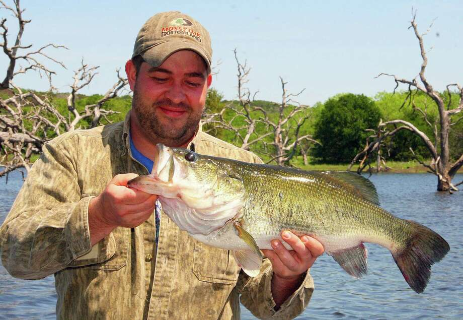 Through March, Texas anglers entered almost 150 largemouth bass weighing 8 pounds or more in the state's 2019 ShareLunker program. That total, caught from 54 different lakes, includes more than 40 bass weighing 10 pounds or more. Photo: Shannon Tompkins / Houston Chronicle