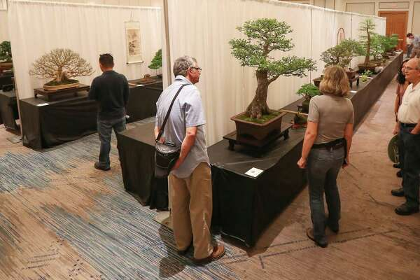 Bonsai On The Bayou Lets Visitors Appreciate Living Art Houstonchronicle Com