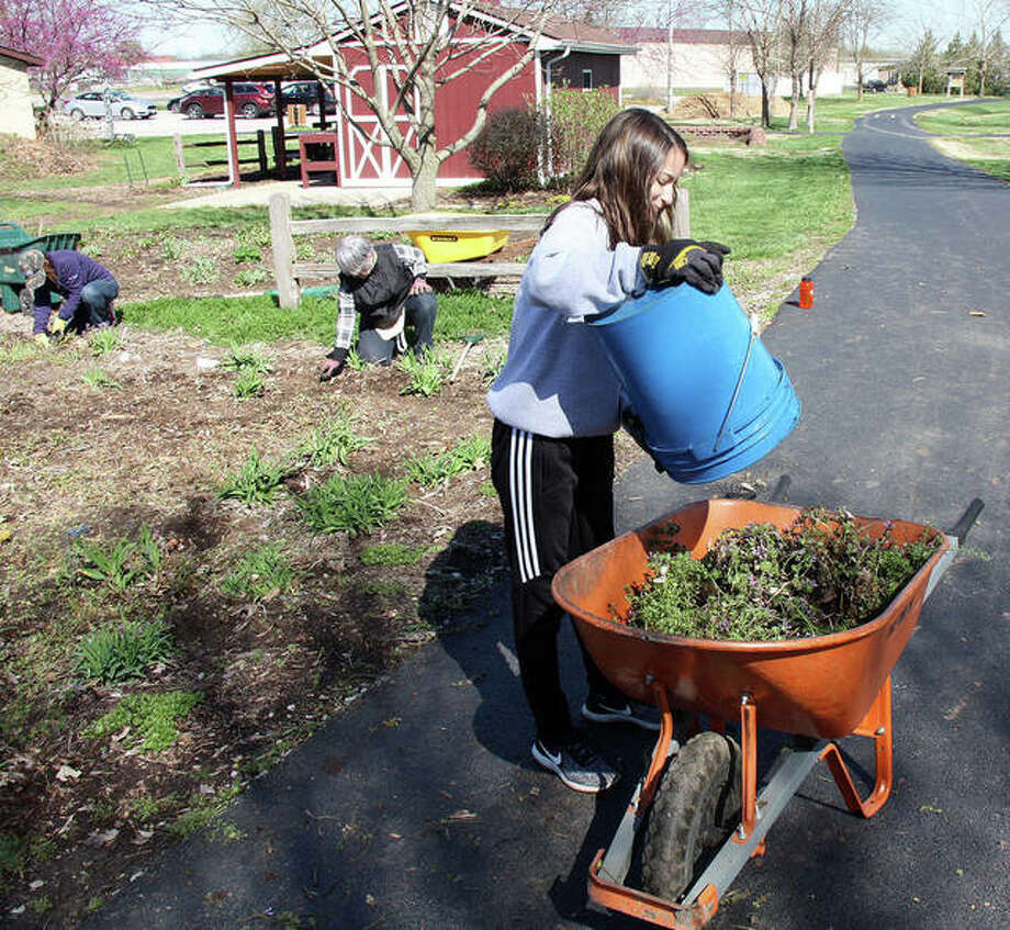 This Maryville Christian School seventh-grader added more weeds and other, unwanted flora from the daylily beds at Drost Park Friday. The students then took turns dumping the wheelbarrow's contents into the compost pile partially visible in the background on the left. Photo: Charles Bolinger | The Intelligencer
