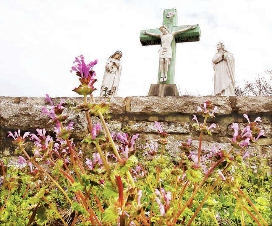 A patch of henbit dead-nettle flowers, sprung up in front of the statue of Jesus on the cross Monday in Alton's St. Joseph Cemetery as Christians worldwide celebrate the Holy Week that leads up to Easter. The week includes Palm Sunday which just passed, Holy Wednesday, Maundy Thursday, Good Friday and Holy Saturday and it is also the last week of Lent. Maundy Thursday commemorates the Last Supper and Good Friday is the day Christians believe the crucifixion and death of Jesus occurred. Good Friday is traditionally a day of fasting and penance in the Christian Church. Photo: John Badman | Hearst Media