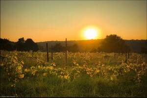 An image from Aquila's Nest Vineyards