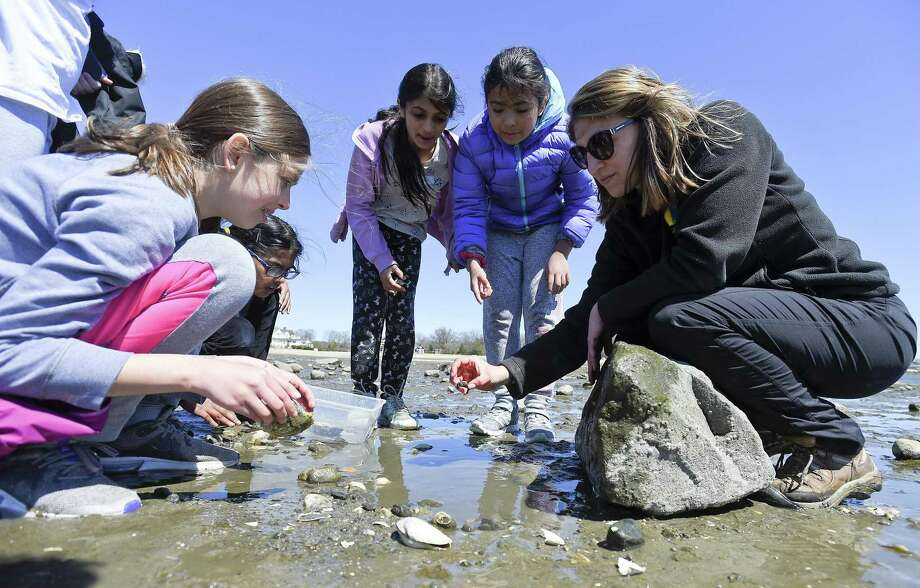 At right, Christina Genz, an educator and camp director at Soundwaters, helps students collect various crab species from the inlet to Holly Pond at Cove Island Park on Tuesday, April 16, 2019 in Stamford, Connecticut. The young students are part of Science Stars, a STEM camp for girls hosted by SoundWaters. Photo: Matthew Brown / Hearst Connecticut Media / Stamford Advocate