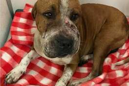 Dexter was found covered with multiple snakebites on his mouth and nose that caused severe swelling in his face.
