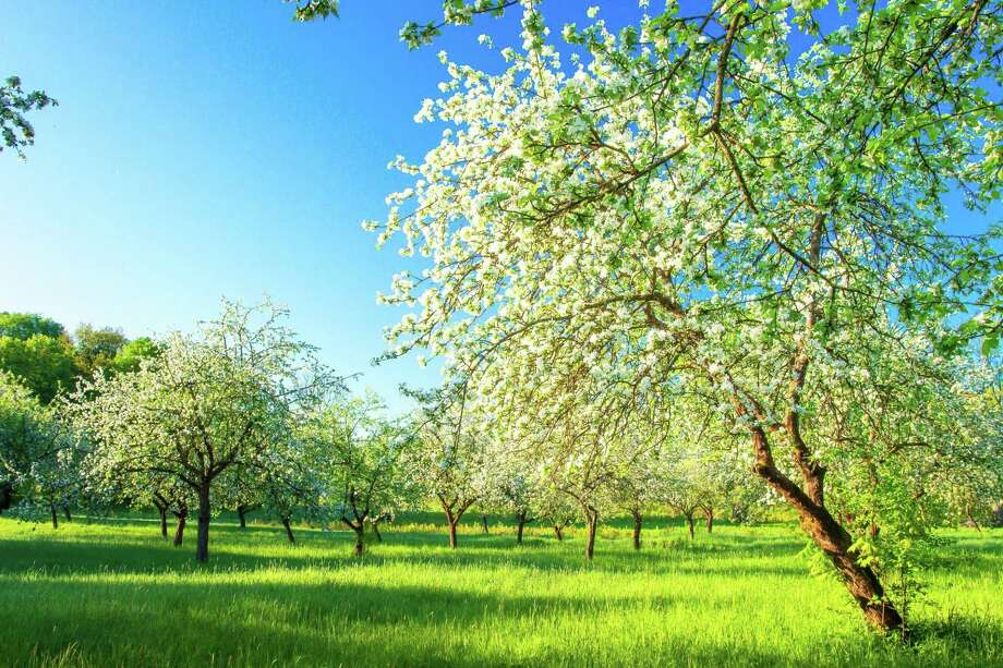 Springtime offers the gift of renewal after a bleak winter. Photo: Dreamstime