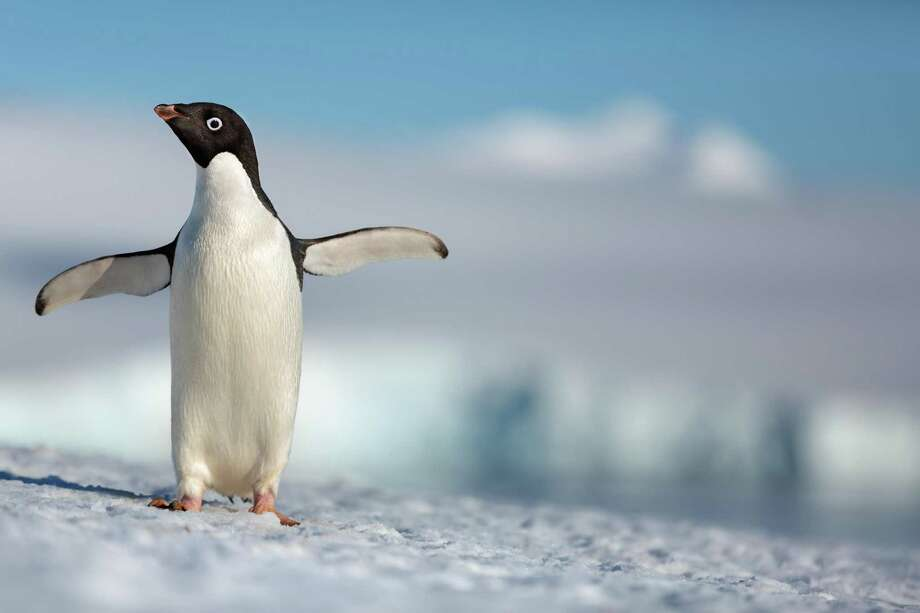 Still from the Disneynature documentary 'Penguins' Photo: Disneynature / © Disney
