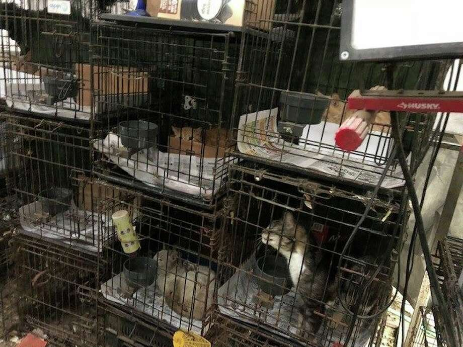Investigators with Harris County Precinct 1 Constable Alan Rosen's Office and the Houston SPCA have rescued animals believed to be part of a hoard in northwest Harris County. The animals were seized Monday, April 15, 2019, in the 8300 block of Wind Veil Drive. Photo: Harris County Precinct 1 Constable's Office