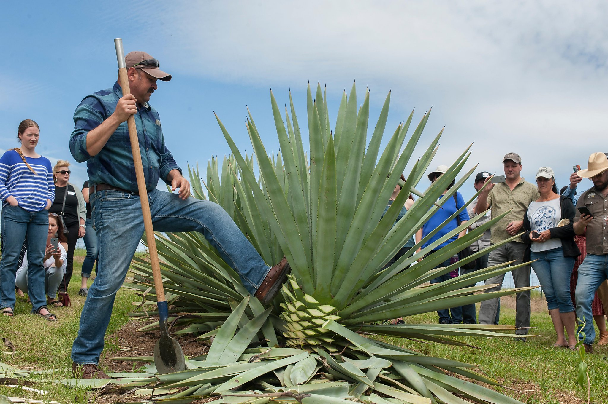 The Mezcalifornia Movement Our First Commercial Agave Spirit Is