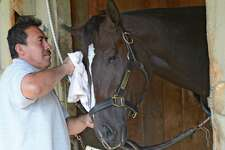 Archwarrior gets some care from his groom Jose Delacruz in Todd Pletcher's barn at the Oklahoma training center in Saratoga Springs, N.Y. Sept. 17, 2012