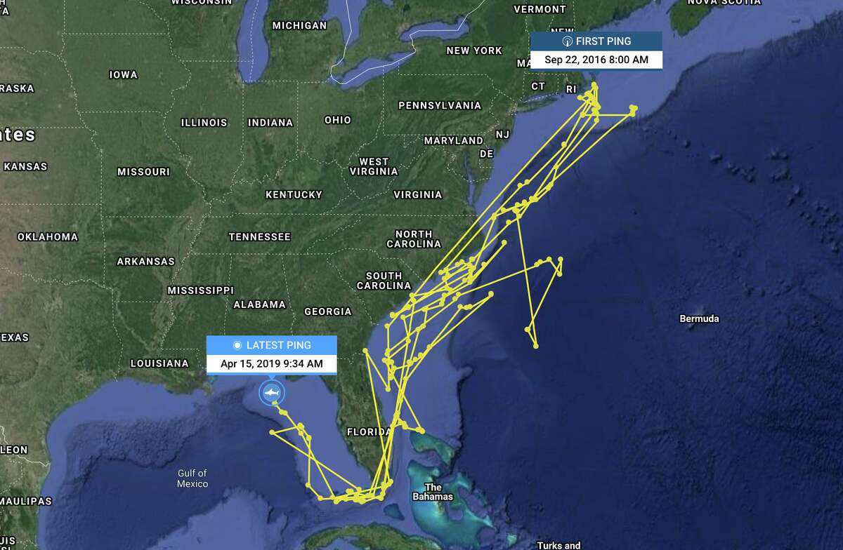 She first pinged this year in the Gulf of Mexico in mid March and has been working her way steadily north ever since.