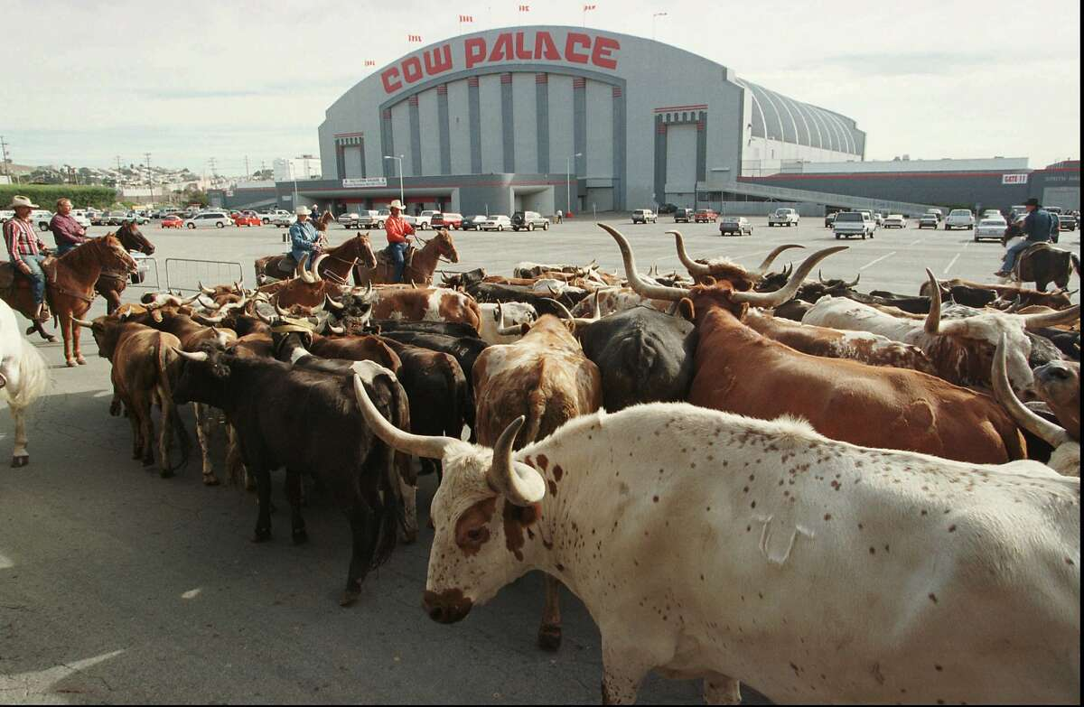"""FILE - In this Oct. 4, 1997, file photo, a herd of cattle is led into the parking lot of the Cow Palace during the cattle drive to the Grand National Rodeo in Daly City. The governing board of the Cow Palace voted Tuesday, April 16, 2019, not to hold shows after 2019, when a contract with the exhibitor Crossroads of the West expires. Lori Marshall, chief executive officer of the Cow Palace, says the decision was """"mindful, although not necessarily governed by,"""" bans on gun shows in surrounding cities and counties. (AP Photo/Eric Risberg, File)"""