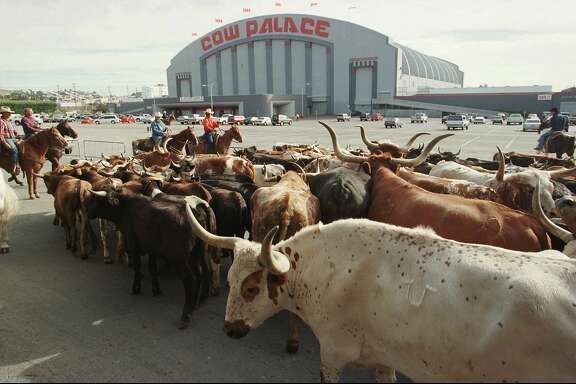 "FILE - In this Oct. 4, 1997, file photo, a herd of cattle is led into the parking lot of the Cow Palace during the cattle drive to the Grand National Rodeo in Daly City.  The governing board of the Cow Palace voted Tuesday, April 16, 2019,  not to hold shows after 2019, when a contract with the exhibitor Crossroads of the West expires. Lori Marshall, chief executive officer of the Cow Palace, says the decision was ""mindful, although not necessarily governed by,"" bans on gun shows in surrounding cities and counties. (AP Photo/Eric Risberg, File)"