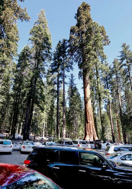 Under the proposed draft statement the parking lot that surrounds the entrance would be eliminated at the Mariposa Grove of Giants Sequoias in Yosemite National Park. Yosemite National Park on Tuesday Feb. 26, 2013, has released the Restoration of the Mariposa Grove of Giant Sequoias Draft Environmental Impact Statement, with the primary goal being to restore giant sequoia habitat and improve the visitor experience.
